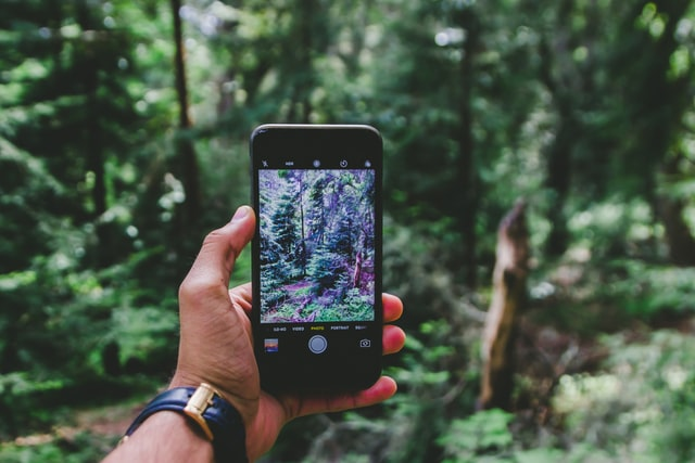 A student taking a photo of a forest on his cell phone.