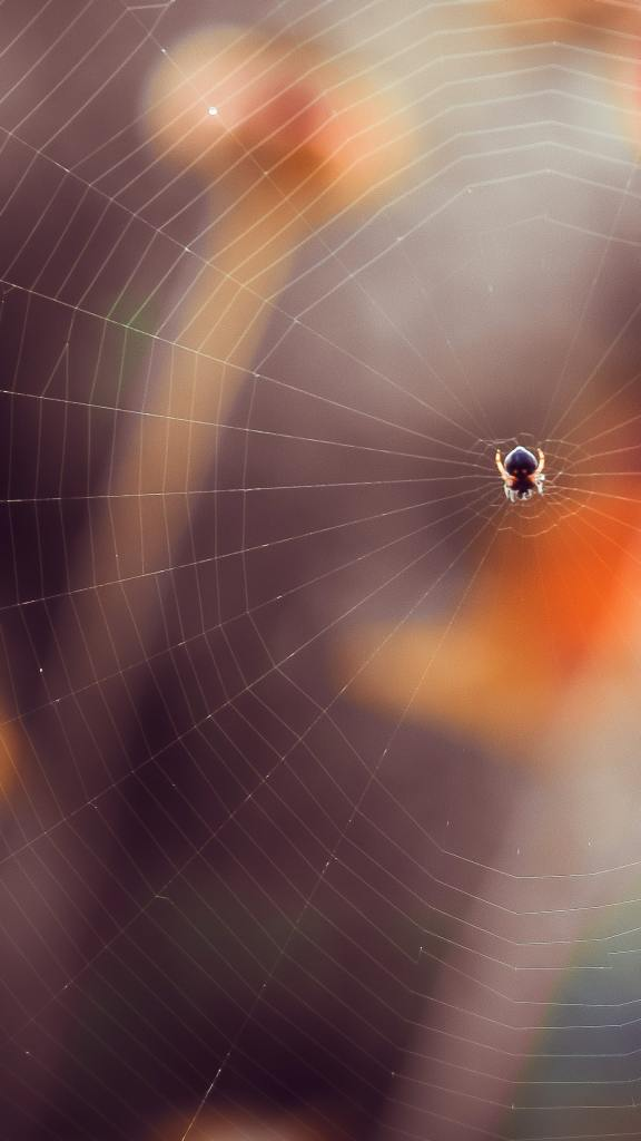 A spider sits in the middle of a spider web