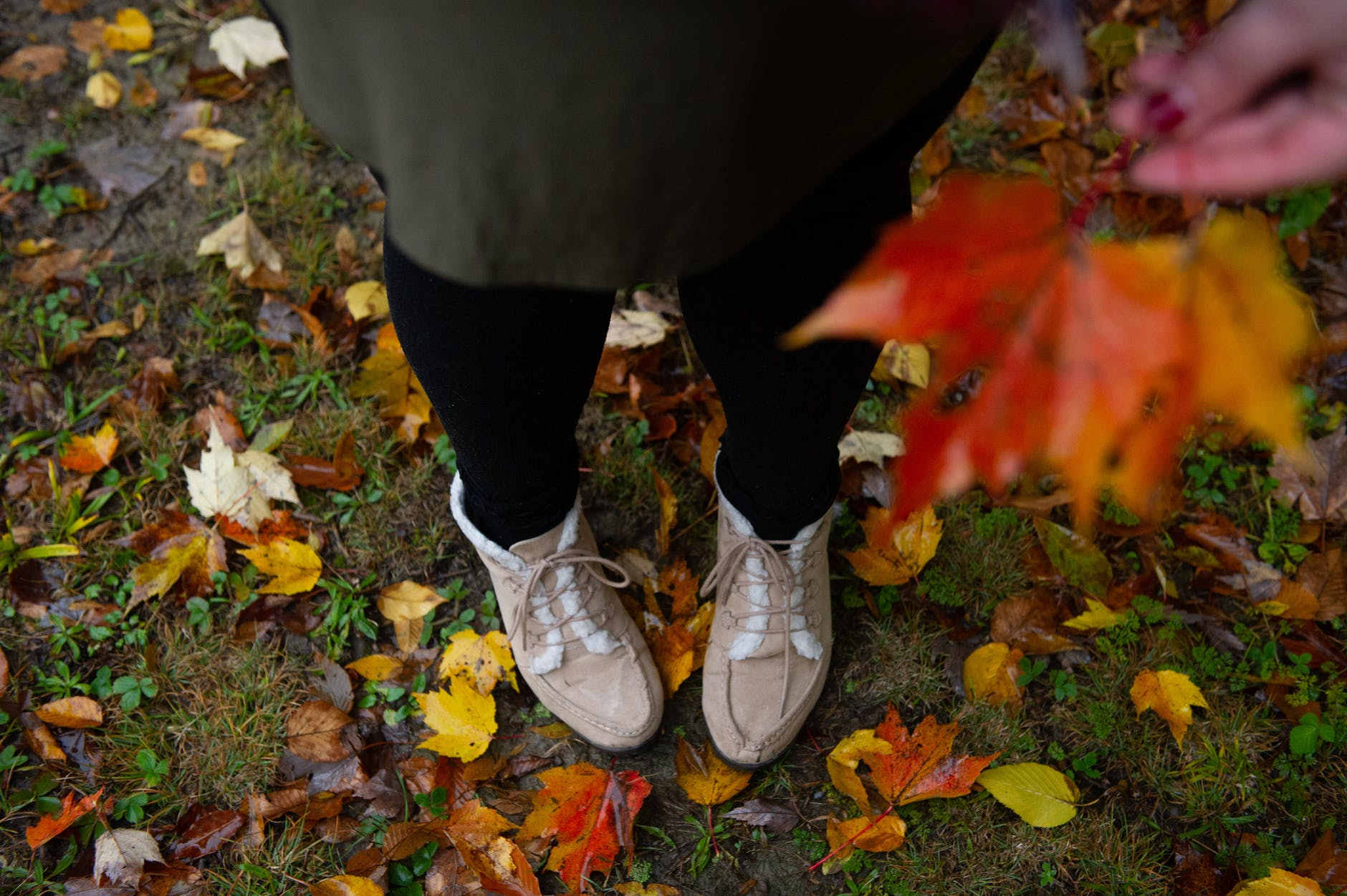 Autumn leaves illustrate Adelaide Crapsey's November-themed cinquain